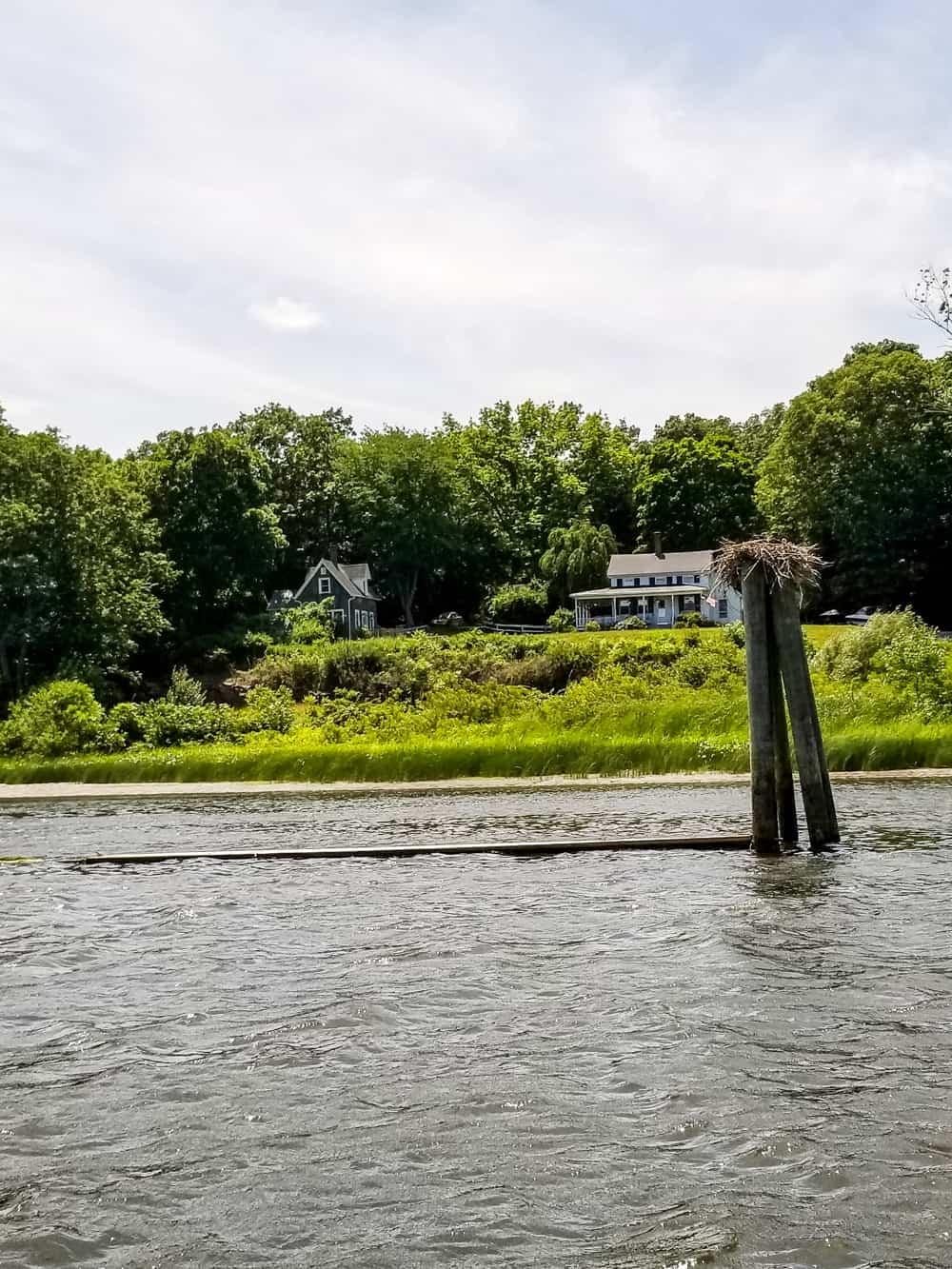 Osprey bird nest on Connecticut river